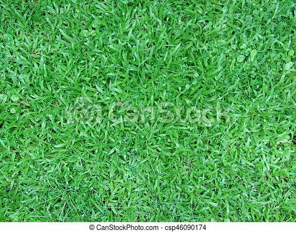 green grass - csp46090174