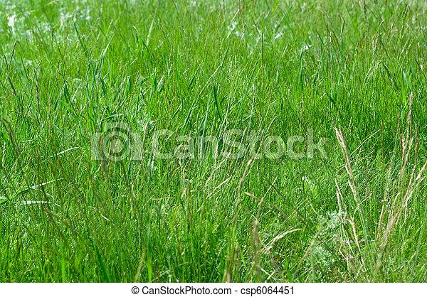 green grass - csp6064451