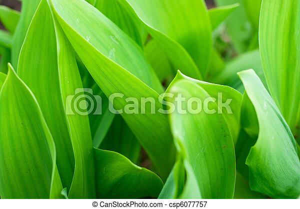 Green grass - csp6077757
