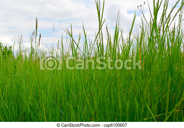 Green grass - csp6100607