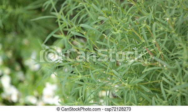 green grass - csp72128270