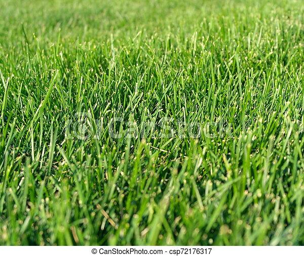 green grass - csp72176317
