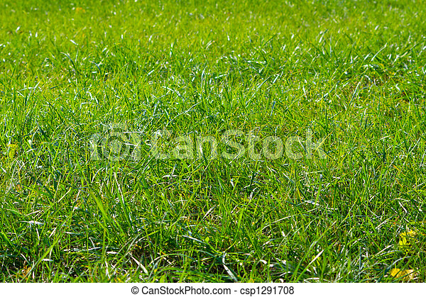 green grass - csp1291708