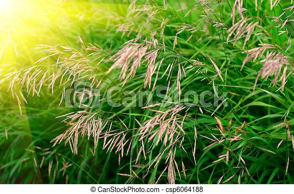 green grass - csp6064188