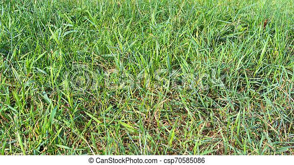 green grass - csp70585086