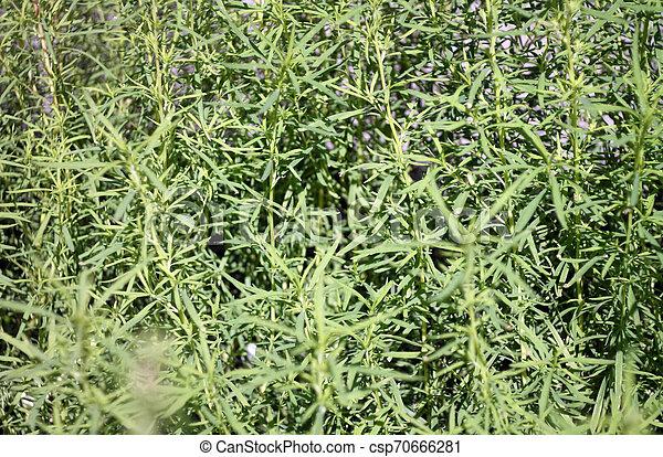 green grass - csp70666281