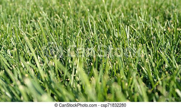 green grass - csp71832280