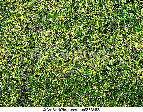 Green grass soccer field background - csp58873458