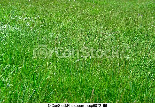 green grass - csp6072196