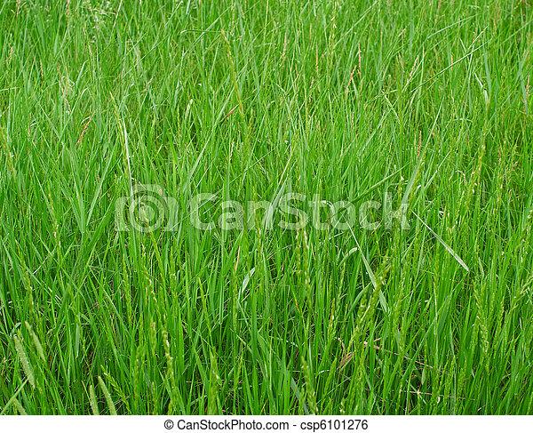 green grass - csp6101276