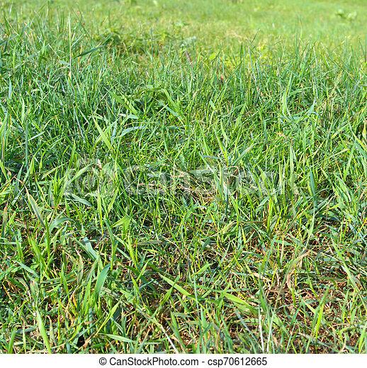 green grass - csp70612665