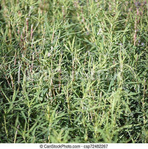 green grass - csp72482267
