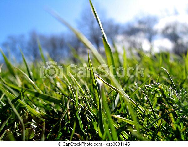 Green Grass - csp0001145