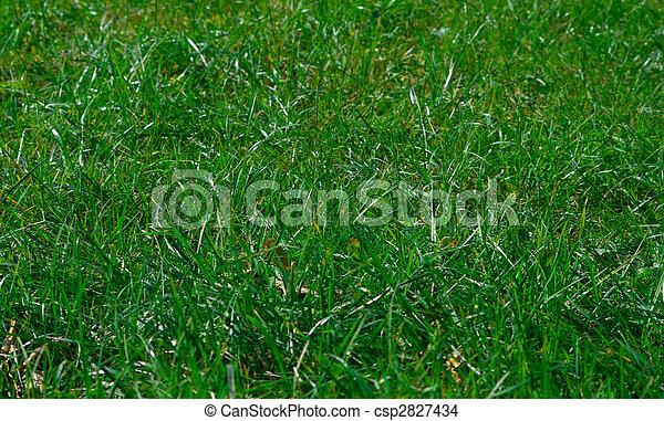green grass - csp2827434