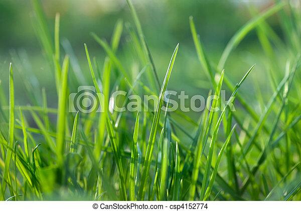 green grass - csp4152774