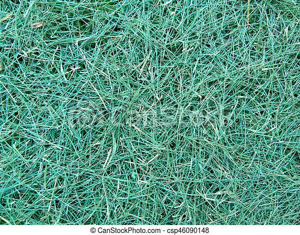 green grass - csp46090148