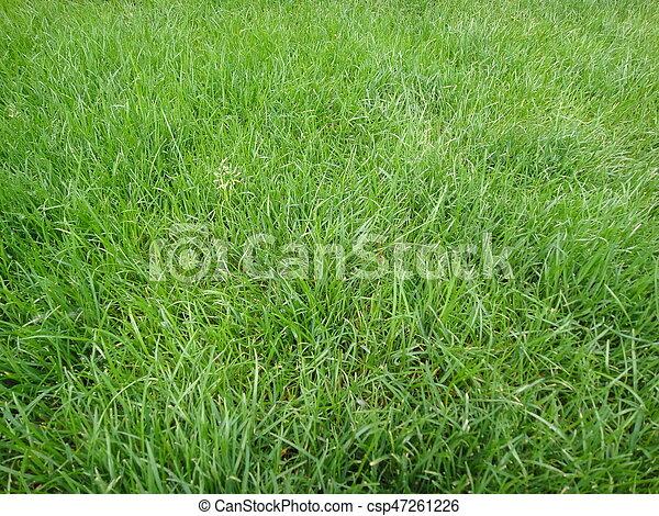 Green grass - csp47261226