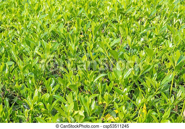 green grass - csp53511245