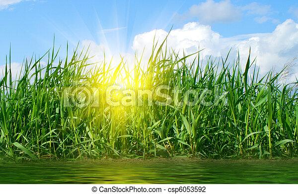 Green grass - csp6053592