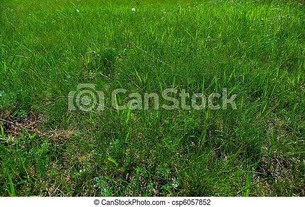 green grass - csp6057852