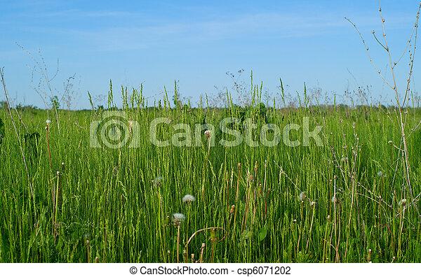 green grass - csp6071202