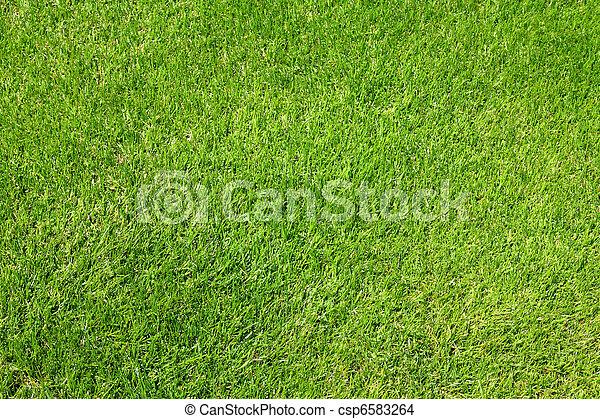 Green grass - csp6583264