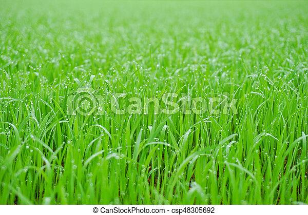 Green grass - csp48305692