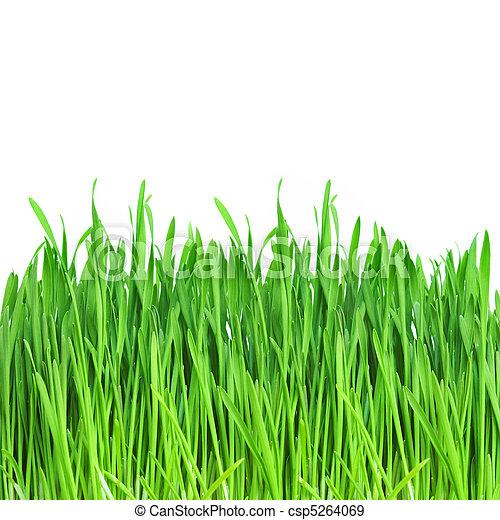 Green grass - csp5264069