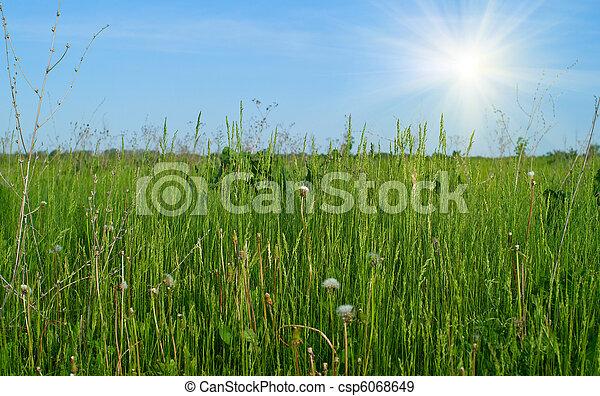 green grass - csp6068649