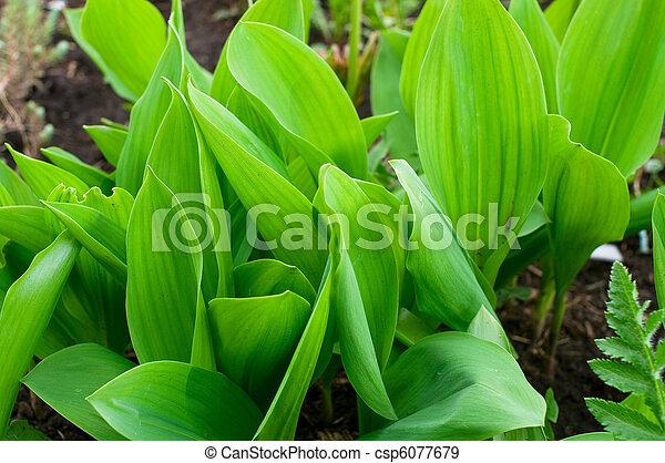 Green grass - csp6077679