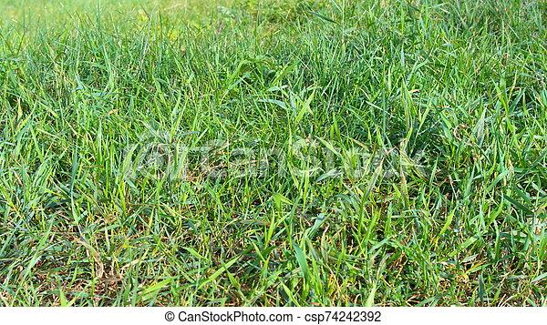 green grass - csp74242392