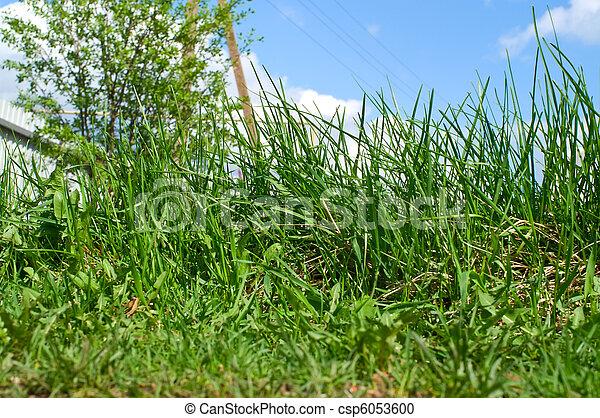 Green grass - csp6053600