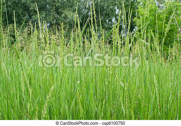 Green grass - csp6100750