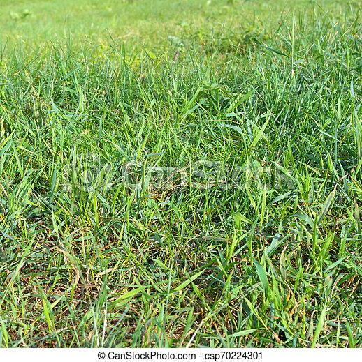 green grass - csp70224301
