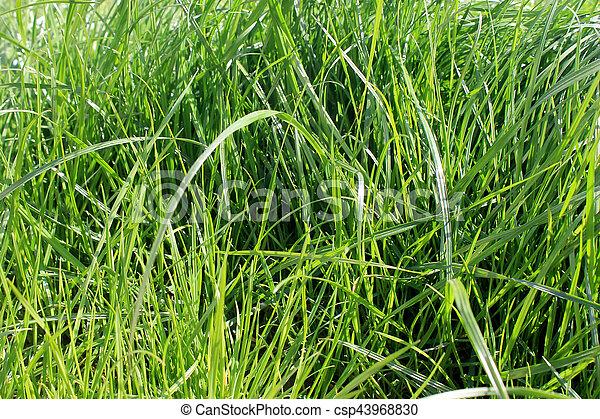 green grass - csp43968830