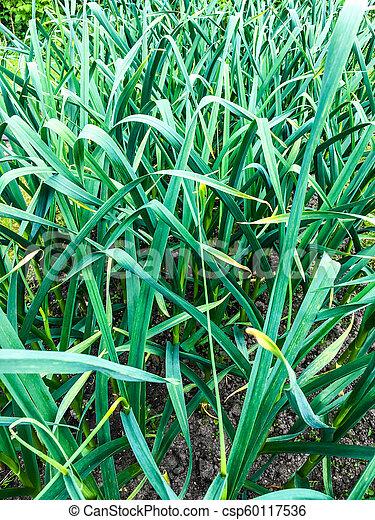 green grass - csp60117536