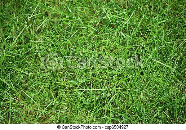 Green grass texture background - csp6504927