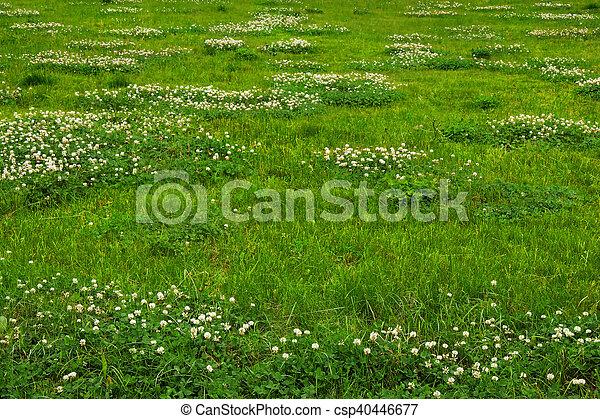 green grass texture from a field csp40446677 f3 field