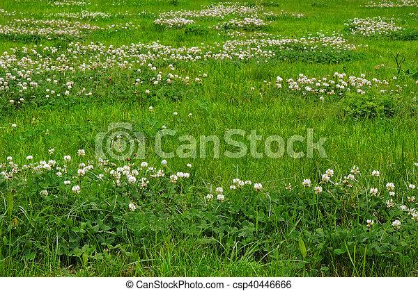 green grass texture from a field csp404466660 field