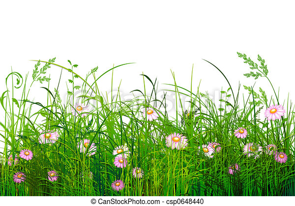 green grass with flowers illustrated green grass with marguerites