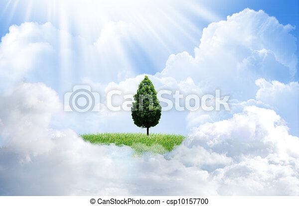 Green grass with tree and cloud sky background - csp10157700