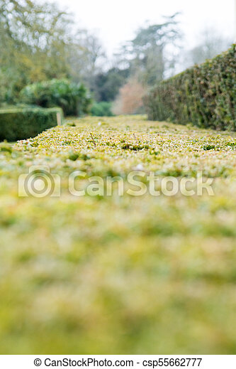 Green Hedge In A Formal Gardens With Blurred Garden Background