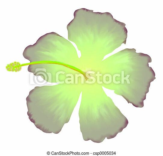 Green Hibiscus - csp0005034