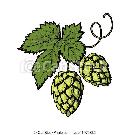 Green hop plant, sketch style vector illustration - csp41070382