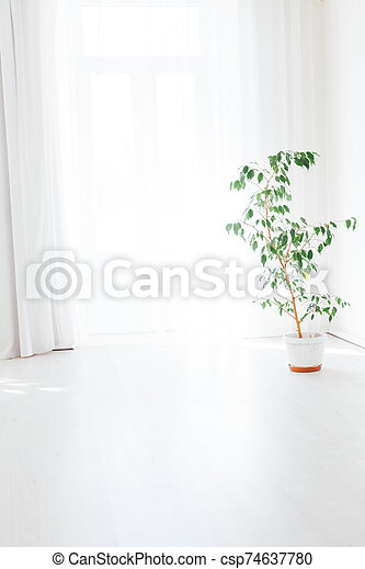 green house plant in a pot stands in a white room - csp74637780