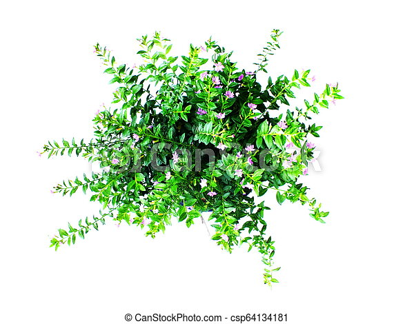 green house plant isolated on white background - csp64134181