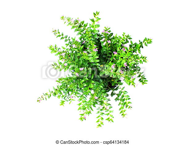 green house plant isolated on white background - csp64134184