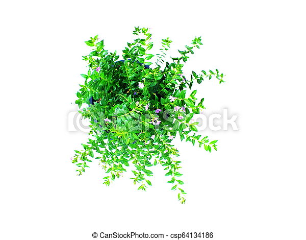 green house plant isolated on white background - csp64134186