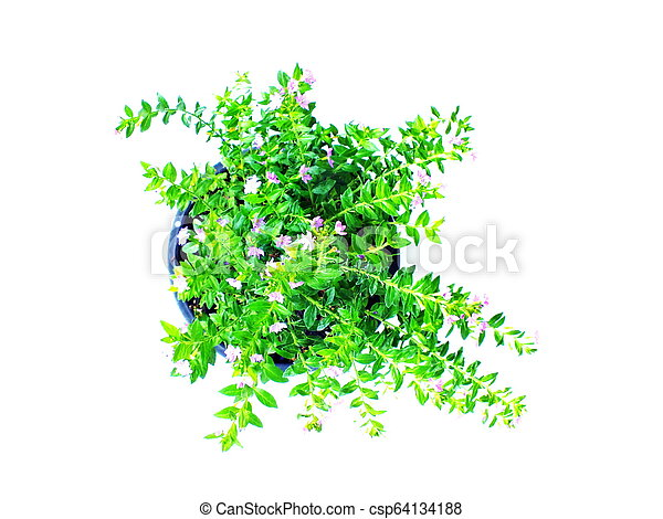 green house plant isolated on white background - csp64134188
