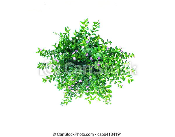 green house plant isolated on white background - csp64134191